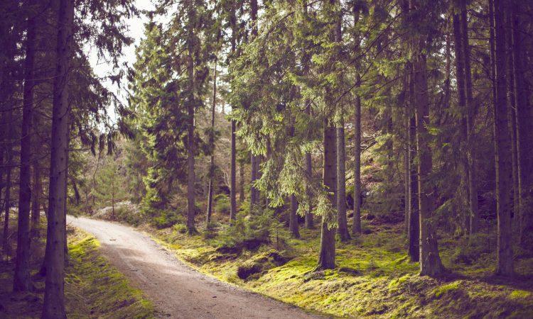 Genießen Sie die schönen Wanderwege des Osnabrücker Landes & im Terra Vita Park